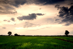 Fält med en aftonhimmel med moln Royaltyfri Foto