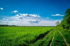 Fält med en härlig molnig himmel Arkivbild