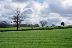 Fält med ett träd Arkivfoto
