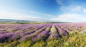 Fält med färg Royaltyfri Foto