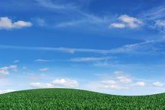 Fält med gräs och blå himmel i bakgrunden royaltyfria bilder