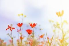Fält med gräs, violetblommor och rött Royaltyfria Foton