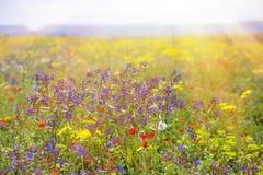 Fält med gräs, violetblommor och rött Fotografering för Bildbyråer