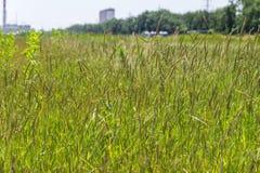 Fält med grönt gräs och blommor Jordbruk växt Backgrou Fotografering för Bildbyråer