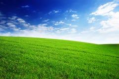 Fält med grönt gräs och himmel med moln Rengöring idylliskt härligt sommarlandskap med solen royaltyfri bild