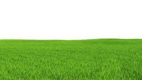 Fält med grönt gräs på en vit bakgrund Fotografering för Bildbyråer
