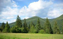 Fält med granar på bakgrunden av bergen och den blåa himlen med moln arkivfoton