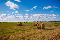 Fält med höstackar Klart väder med moln Många höstackar Arkivfoton