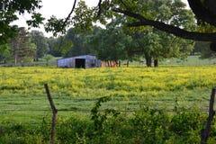 Fält med ladugården och hästar i bakgrund Arkivbilder