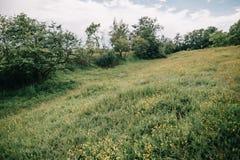 Fält med landskapsommar för gröna skördar Fotografering för Bildbyråer