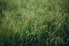 Fält med landskapsommar för gröna skördar Royaltyfri Foto