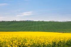 Fält med linjer för medelspår fotografering för bildbyråer