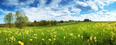 Fält med maskrosor och blå himmel Royaltyfria Bilder