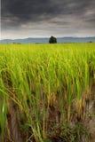 Fält med moln Royaltyfri Fotografi