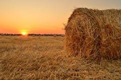 Fält med rullar av sugrör Fotografering för Bildbyråer