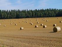 Fält med stora runda sugrörbaler Royaltyfria Bilder