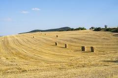 Fält med sugrörbuntar, når att ha skördat Royaltyfri Foto