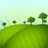 Fält med träd Arkivfoto