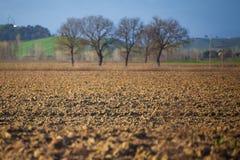 Fält med trädet Fjädra den tid… ron lämnar, naturlig bakgrund Arkivfoton