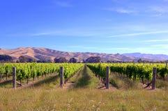 Fält med vinrankor i Nya Zeeland Arkivbild