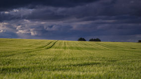 Fält, när stormen är kommande royaltyfri bild