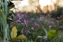 Fält nära vägen Fotografering för Bildbyråer