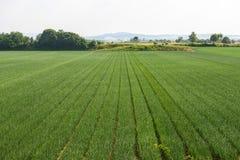 Fält nära Voghera Arkivbilder