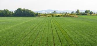 Fält nära Voghera Royaltyfri Fotografi