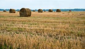 Fält, når att ha skördat vete, höstack Royaltyfria Foton