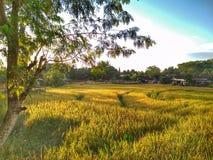 Fält och by arkivfoto