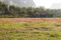 Fält och berg och rosa färgblommor Royaltyfri Foto