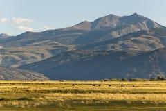 Fält och berget Fotografering för Bildbyråer