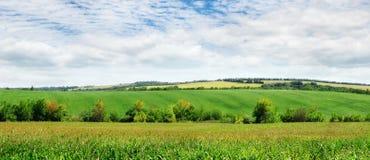 Fält och blå sky Fotografering för Bildbyråer