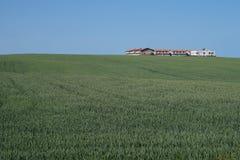 Fält och byggnader Royaltyfri Bild