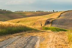 Fält och fred i den varma solen av Tuscany, Italien Royaltyfri Bild