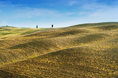 Fält och fred i den varma solen av Tuscany, Italien Arkivfoto