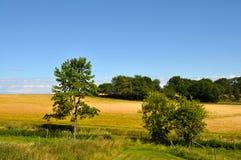 Fält och himmel Royaltyfri Bild