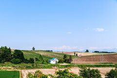 Fält och himmel Arkivfoto