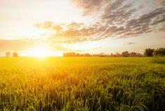 Fält och himmel i guld- timmar Fotografering för Bildbyråer