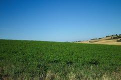 Fält och kullar i Marche Arkivfoto