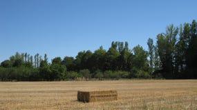 Fält och landskap Arkivfoto
