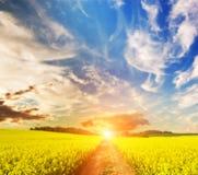 Fält och landsvägen in mot solen Royaltyfri Fotografi
