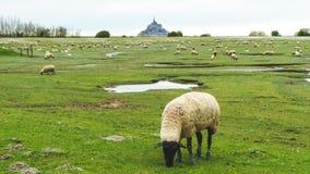 Fält och Mont Saint-Michel Royaltyfri Fotografi