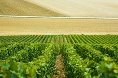 Fält och rader av druvor i bygden, Frankrike Arkivfoto