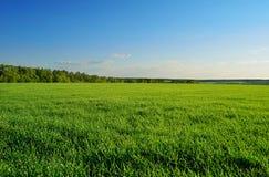 Fält och skog under klar himmel Arkivbild