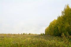 Fält och skogar i nedgången i centrala Ryssland - gulna, göra grön, orange färgpulver Royaltyfria Bilder