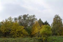Fält och skogar i nedgången i centrala Ryssland - gulna, göra grön, orange färgpulver Arkivbilder