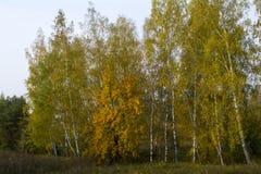 Fält och skogar i nedgången i centrala Ryssland - gulna, göra grön, orange färgpulver Arkivfoto