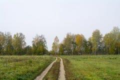 Fält och skogar i nedgången i centrala Ryssland - spring för landsväg längs fältet Royaltyfri Fotografi