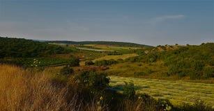 Fält och skogkullelandskap royaltyfri foto